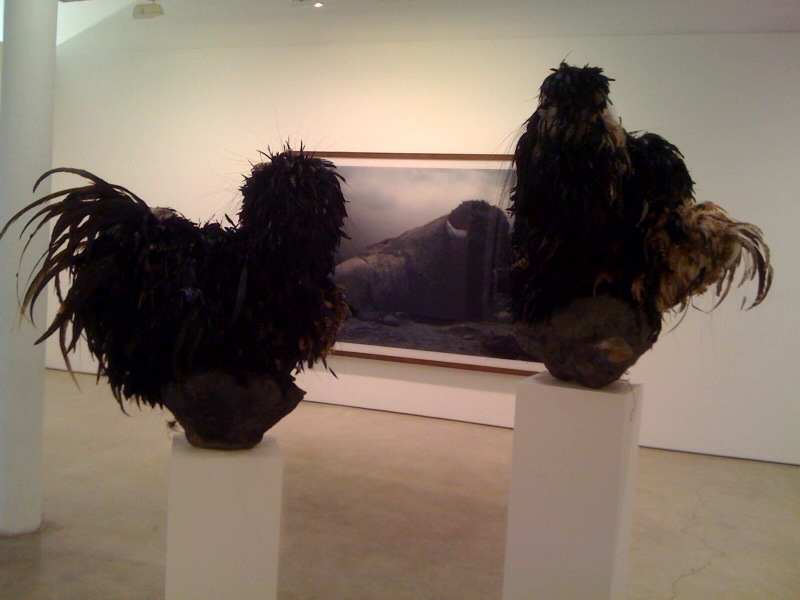 Untitled #150 (Black Chickens), 2009, front