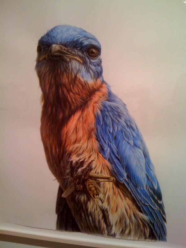Bluebird, 2009