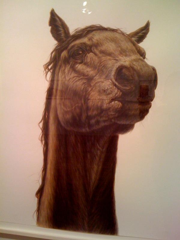 Horse, closeup, 2008