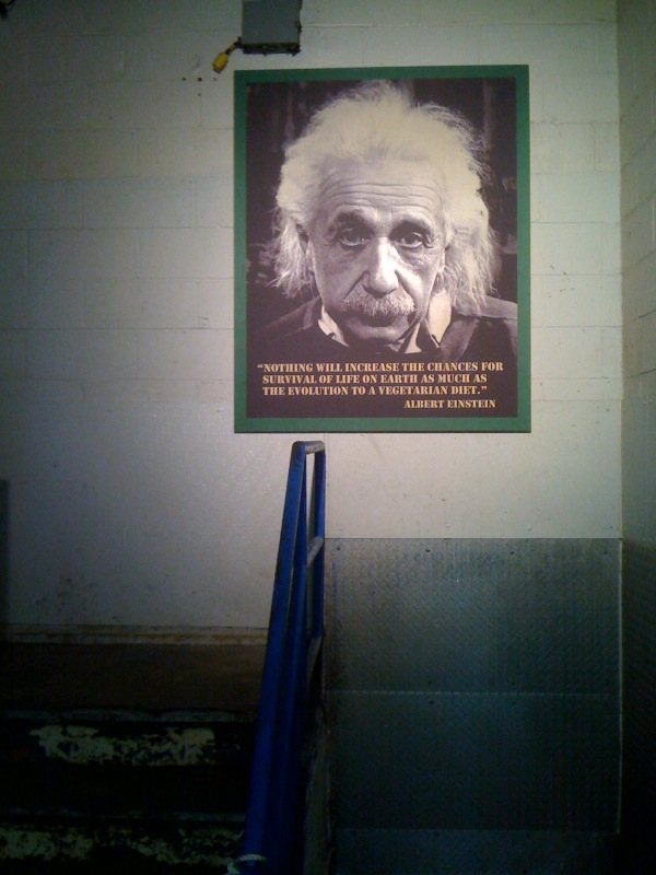 Green Einstein, 2002-10