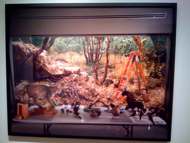 Diorama with Bobcat Removal, San Francisco, 2005