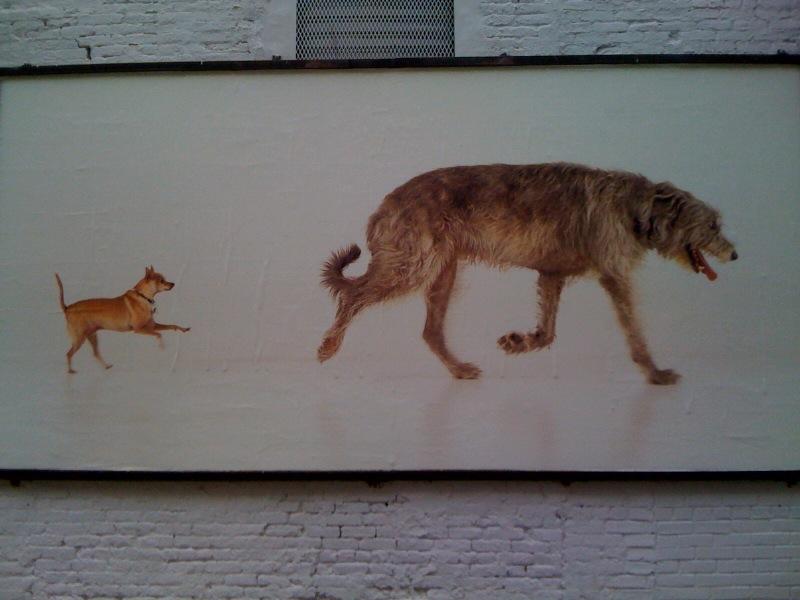 Orson & Sparky, 2010