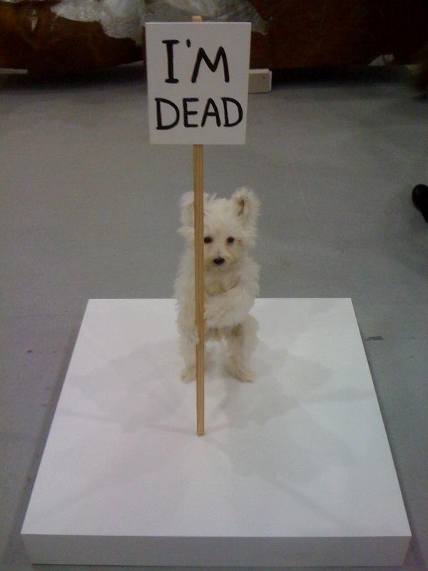 David Shrigley, I'm Dead, 2011, Anton Kern Gallery, NY at Independent
