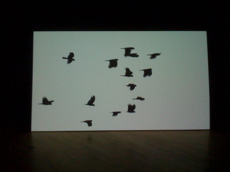 O, 2009, birds