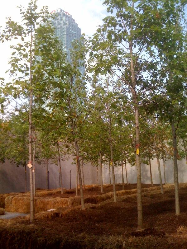 Side Courtyard, Urban Wood 2