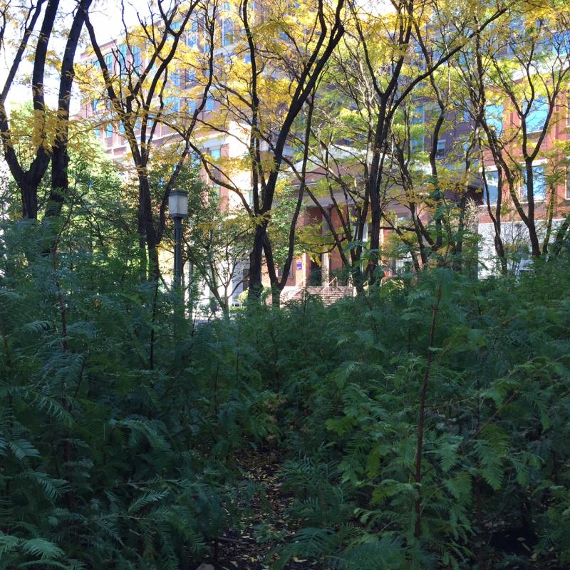 Lost Man Creek Detail 5